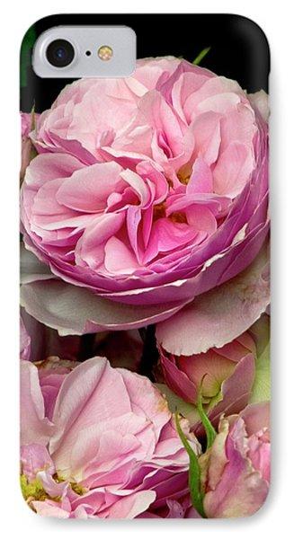 Rose (rosa 'the Enchantress') Flowers IPhone Case