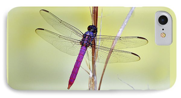 Roseate Skimmer Dragonfly IPhone Case