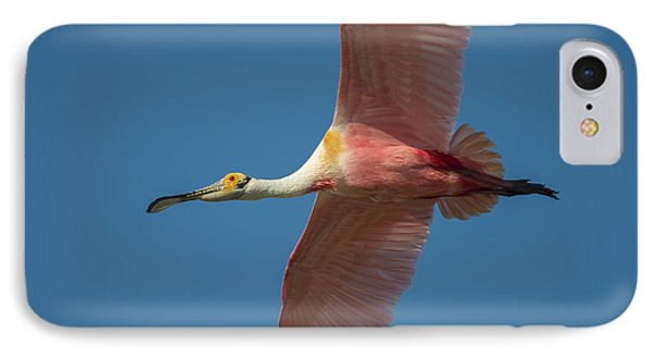 Roseate Spoonbill In Flight IPhone Case by Richard Mason
