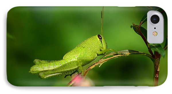 IPhone Case featuring the photograph Rosemary Grasshopper - Instar Nymph by Kathy Baccari