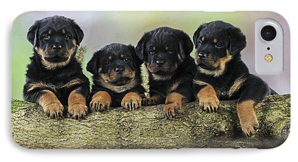 Rottweiler Puppies IPhone Case by John Daniels