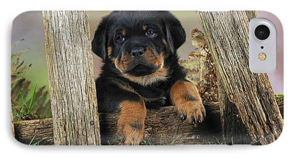 Rottweiler Puppy Dog IPhone Case by John Daniels