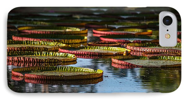 Round Leaves Of Victoria Regia. Royal Botanical Garden. Mauritius IPhone Case by Jenny Rainbow