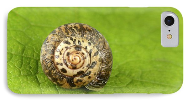 Rounded Snail IPhone Case by Nigel Downer