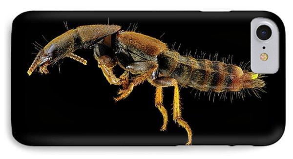 Rove Beetle IPhone Case