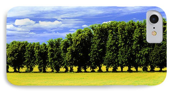 Row Of Trees, Uppland, Sweden IPhone Case by Panoramic Images
