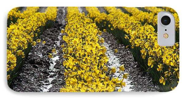 Rows Of Daffodils IPhone Case