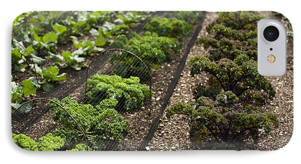 Rows Of Kale Phone Case by Anne Gilbert