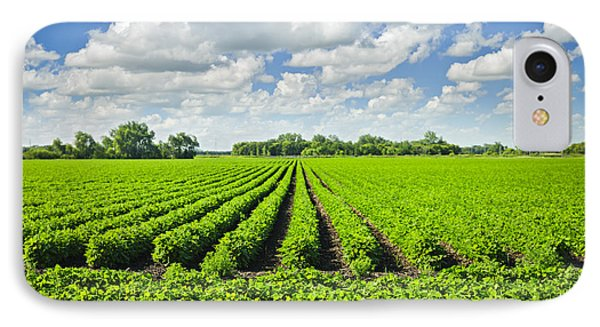 Rows Of Soy Plants In Field IPhone Case