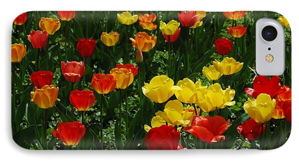 Rows Of Tulips Phone Case by Kathleen Struckle