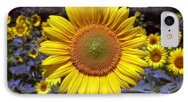 IPhone Case featuring the photograph Roxanna Sunflower by Bill Swartwout