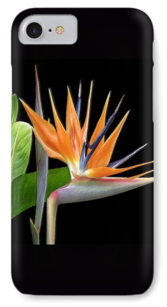 Royal Beauty I - Bird Of Paradise IPhone Case