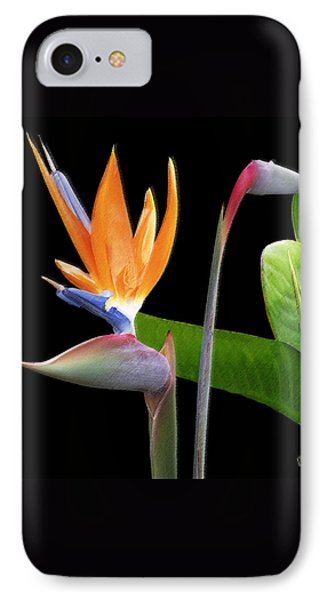 Royal Beauty II - Bird Of Paradise Phone Case by Ben and Raisa Gertsberg