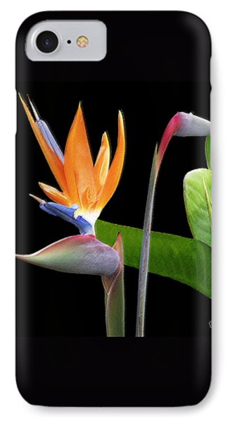 Royal Beauty II - Bird Of Paradise IPhone Case