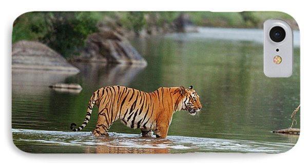 Royal Bengal Tiger, In The River IPhone Case