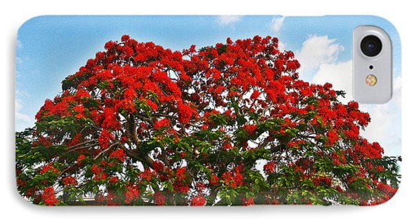 IPhone Case featuring the photograph Royal Panciana Tree by Joan McArthur