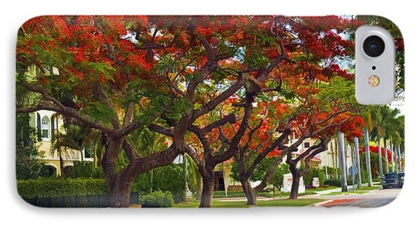 Royal Poinciana Trees In Blooming In South Florida IPhone Case