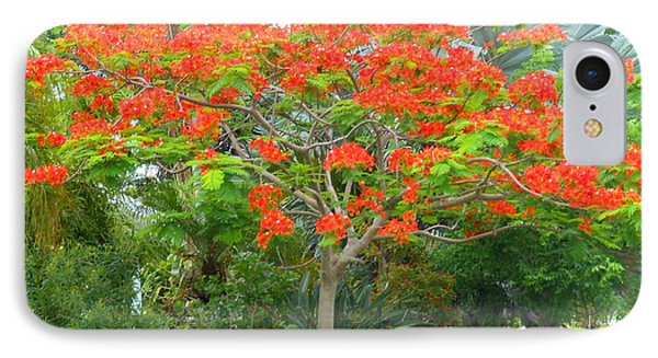 IPhone Case featuring the photograph Royal Poinciana by Kay Gilley