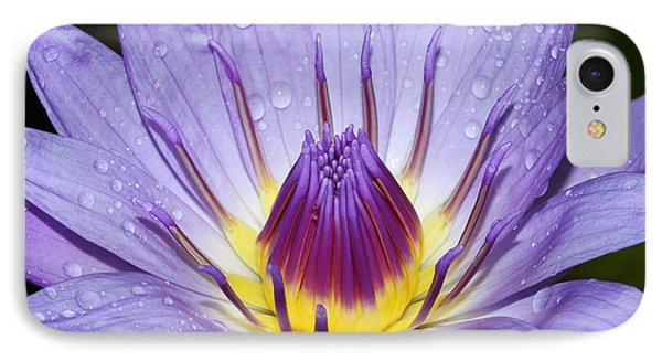 Royal Purple Water Lily #3 IPhone Case