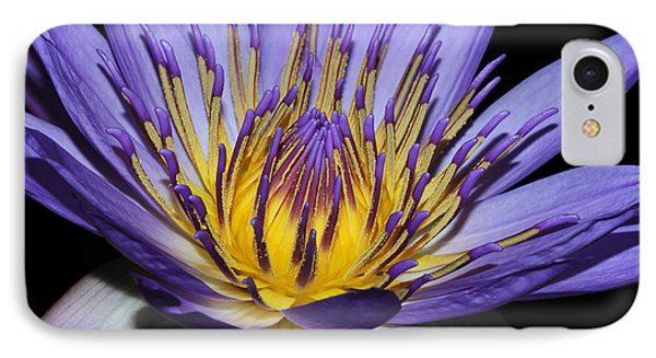 Royal Purple Water Lily #5 IPhone Case by Judy Whitton