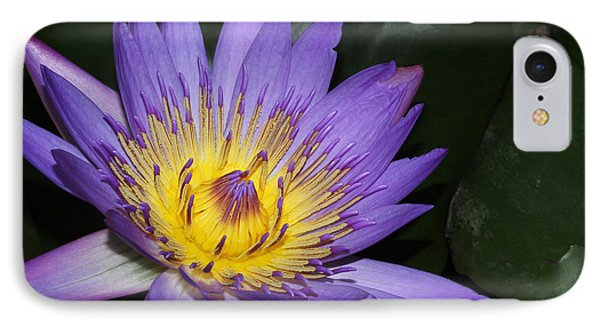 Royal Purple Water Lily #6 IPhone Case
