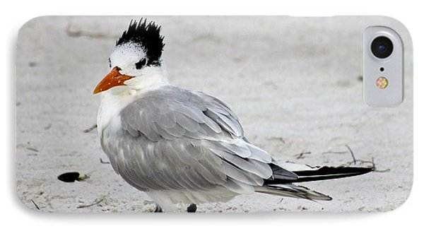 Royal Tern - Adult Nonbreeding IPhone Case by Jeanne Kay Juhos
