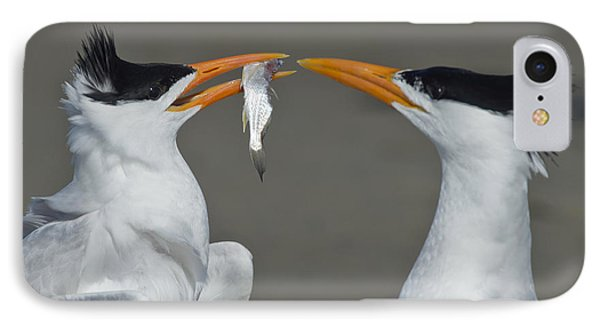 Royal Terns IPhone Case