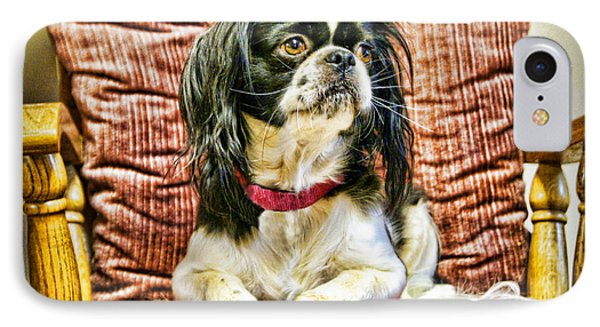 Royalty - Japanese Spaniel IPhone Case by Cricket Hackmann