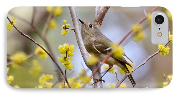 IPhone Case featuring the photograph Ruby-crowned Kinglet by Kerri Farley