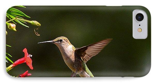 Ruby Throat Hummingbird IPhone Case by Kathy Eickenberg