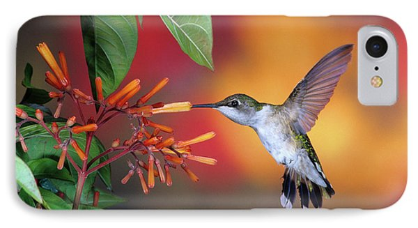Ruby-throated Hummingbird Archilochus IPhone Case by Panoramic Images