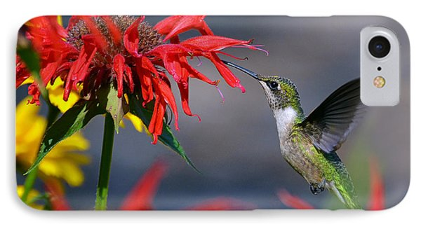 Ruby Throated Hummingbird In A Flower Garden IPhone Case