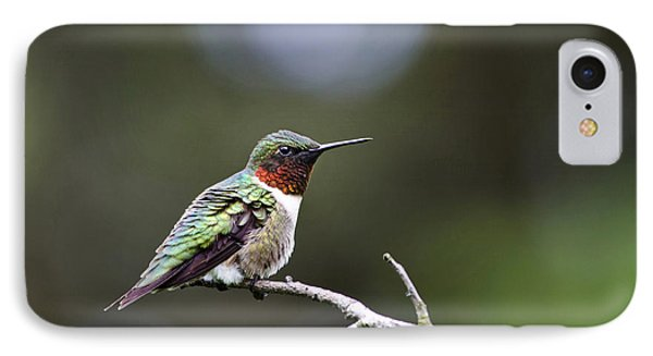 Ruby Throated Hummingbird Spotlight Phone Case by Christina Rollo