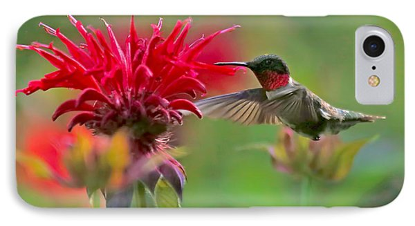 Ruby Throated Hummingbird With Beebalm IPhone Case