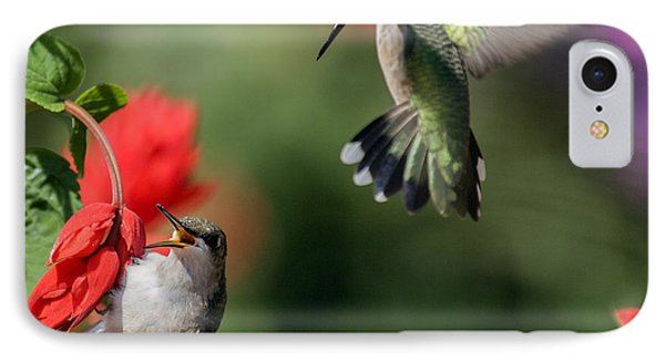 Ruby-throated Hummingbirds IPhone Case by David Lester