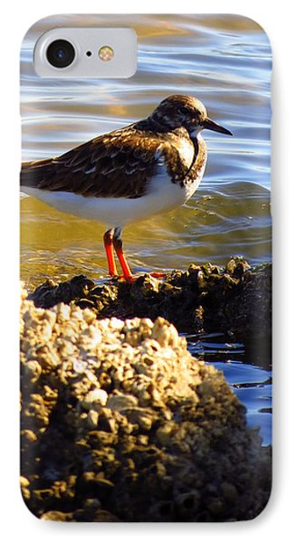 IPhone Case featuring the photograph Ruddy Turnstone  by Phyllis Beiser