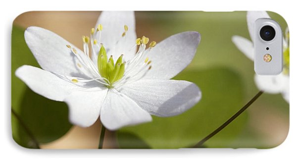 Rue Anemone IPhone Case by Melinda Fawver