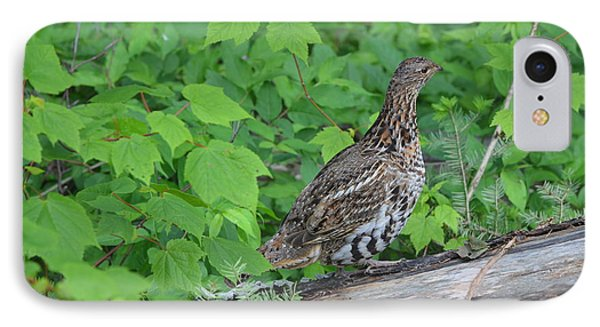 Ruffed Grouse IPhone Case