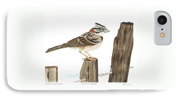 Rufous-collared Sparrow IPhone Case by Cindy Hitchcock