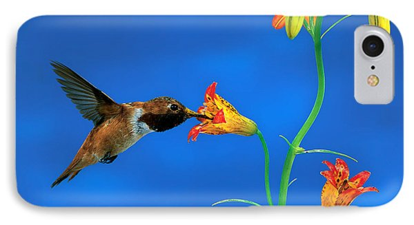 Rufous Hummingbird Phone Case by Anthony Mercieca