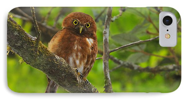 Rufous Morph Costa Rican Pygmy-owl Phone Case by Tony Beck