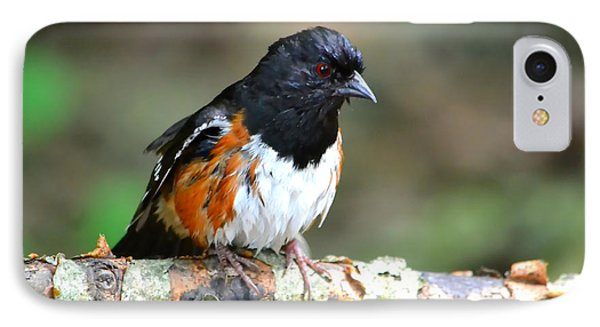 Rufous Sided Towhee IPhone Case by Deena Stoddard