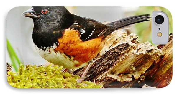 IPhone Case featuring the photograph Spotted Towhee by VLee Watson