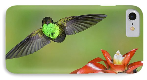 Rufous-tailed Hummer-ecuador Phone Case by Anthony Mercieca