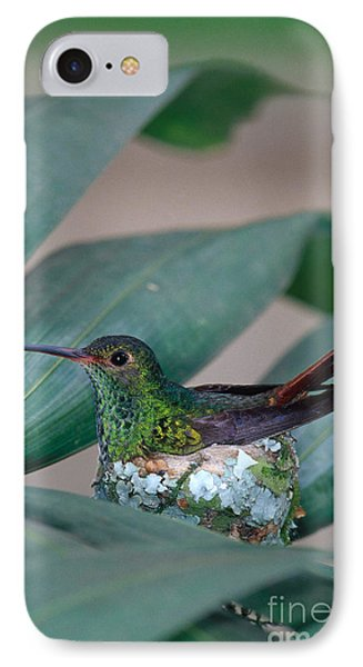 Rufous-tailed Hummingbird On Nest Phone Case by Gregory G Dimijian MD