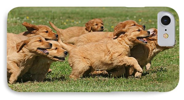 Running Golden Retriever Puppies IPhone Case by Dog Photos