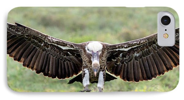 Ruppells Griffon Vulture Gyps IPhone Case by Panoramic Images