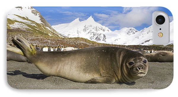 Southern Elephant Seal Pup IPhone Case by Yva Momatiuk John Eastcott