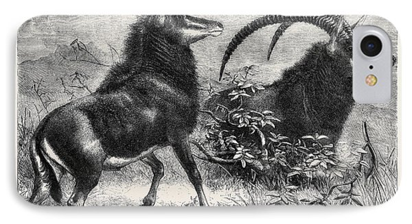Sable Antelope From Southern Africa Recently Added IPhone Case by English School