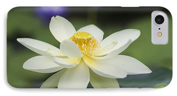 Sacred Lotus  IPhone Case by Tim Gainey